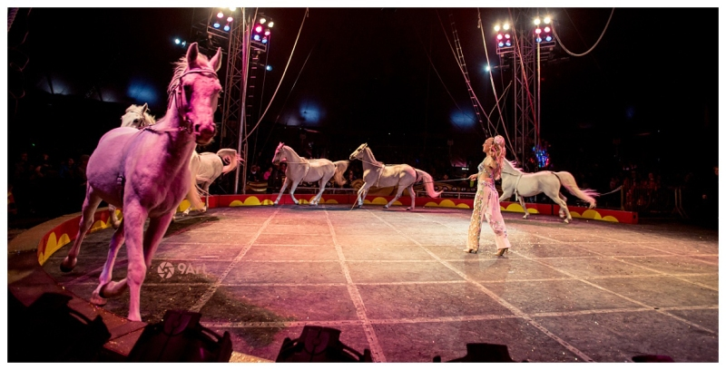 Tarzan zerbini circus 2015 joplin mo event & commercial photographer mark n. photography_0001b